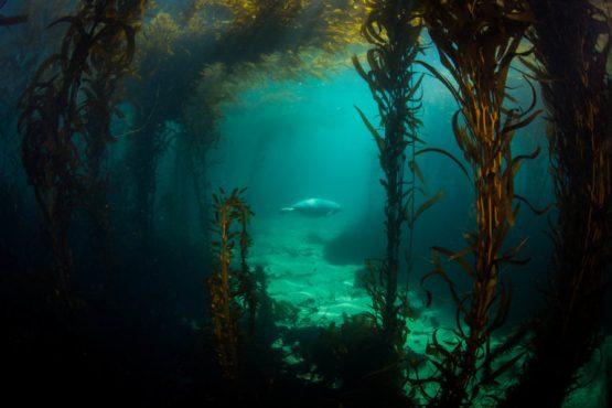 Copy-of-Langhans-Michael-15-Point-Lobos-Eastern-Pacific-harbor-seal-Phoca-vitulina-richardii-2018-1-768x512.jpg