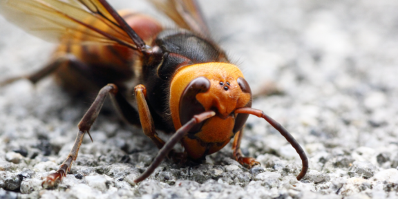 Hornets-Blog-Header--1024x512