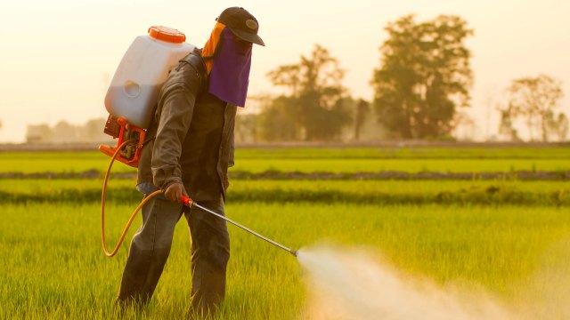 Farmer spraying pesticide in Thailand