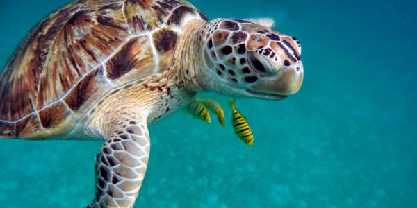 green+turtle+eNews+