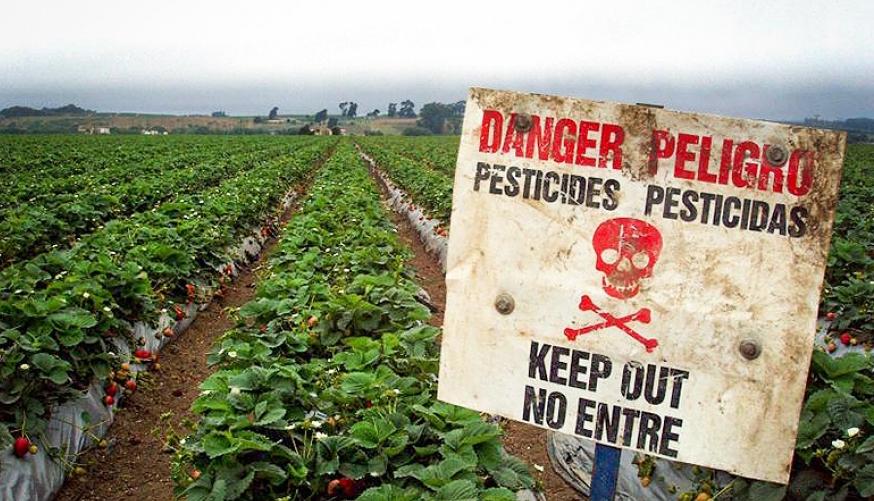 strawberry_pesticide