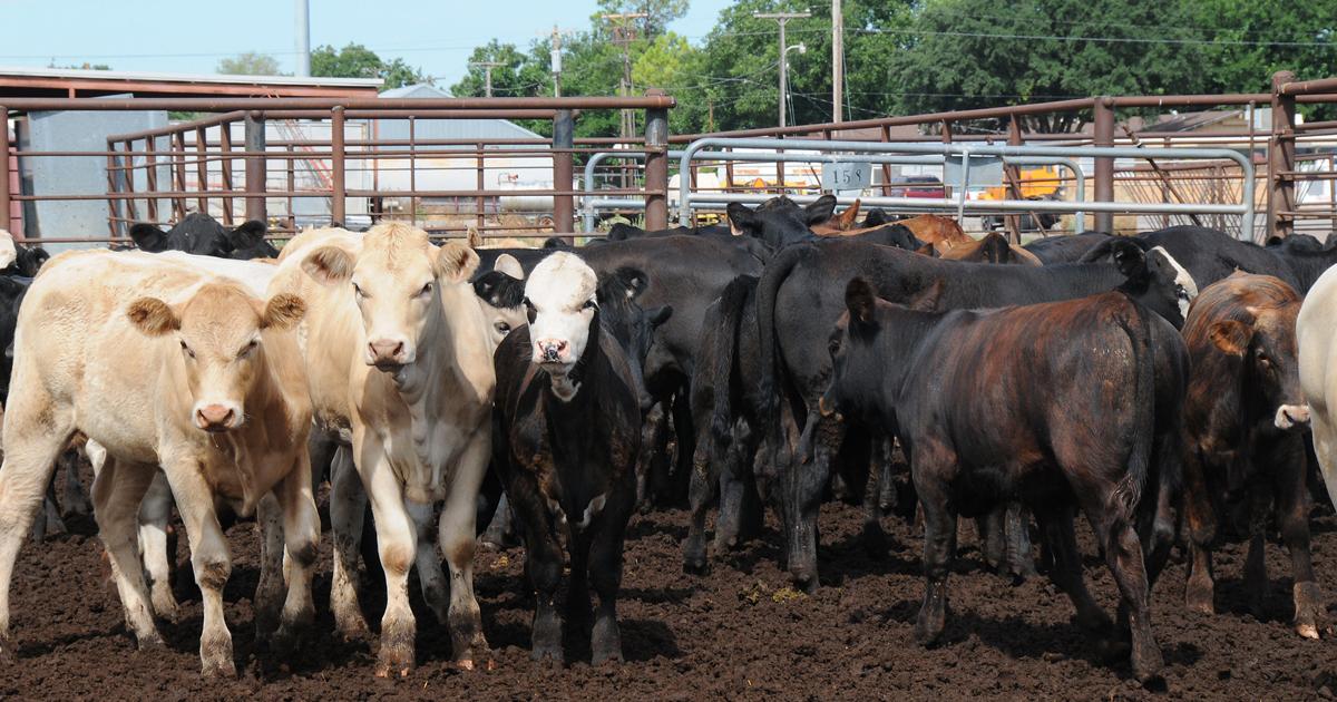 beef-cattle-feedlot-USDA1200x630.jpg