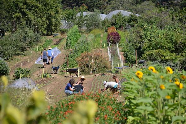 planting-in-down-garden